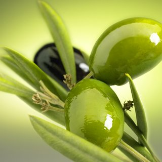 Zeytin Yağı